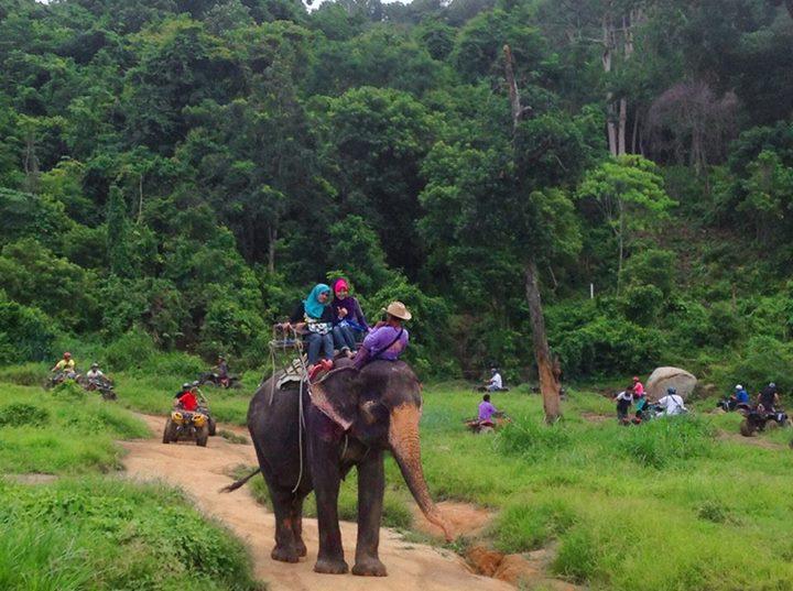 phuket elephant riding